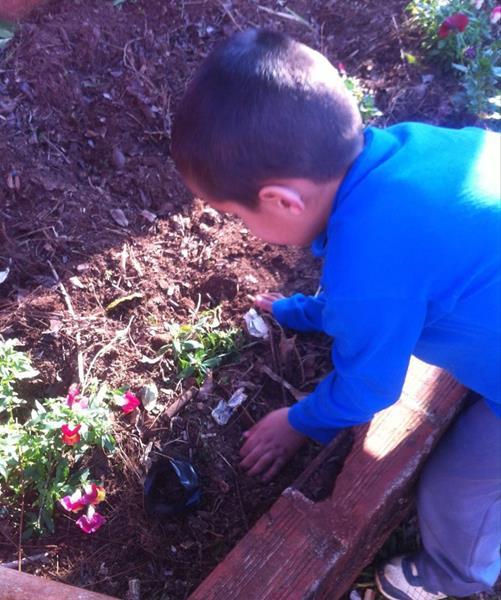 Escola Ulisses Salazar desenvolve Projeto Natureza