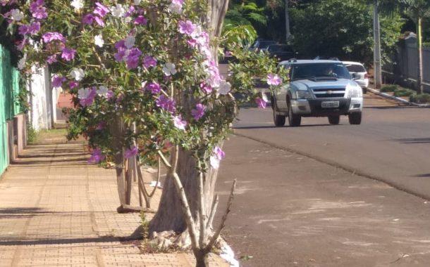 SECRETARIA DA AGRICULTURA REALIZA PLANTIO DE MUDAS